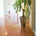 Reception Area - Polished Concrete Floor